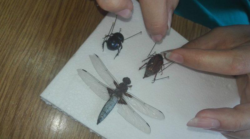 Wiedza w praktyce – świat owadów